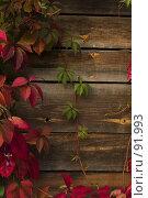 Купить «Девичий виноград», фото № 91993, снято 30 сентября 2007 г. (c) Cangaroo / Фотобанк Лори