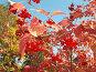 Калина осенью, эксклюзивное фото № 92225, снято 30 сентября 2007 г. (c) Татьяна Юни / Фотобанк Лори