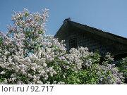 Купить «Крыша дома в зарослях черемухи», фото № 92717, снято 28 мая 2007 г. (c) Старостин Сергей / Фотобанк Лори