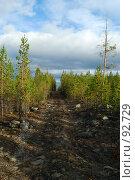 Купить «Дорога через сосновый лес», фото № 92729, снято 3 октября 2007 г. (c) Валерий Александрович / Фотобанк Лори