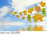 Купить «Летящие разноцветные листья на фоне неба и их отражение в воде», фото № 93093, снято 22 сентября 2007 г. (c) Елена Блохина / Фотобанк Лори