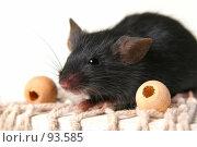 Купить «Мышь», фото № 93585, снято 23 сентября 2007 г. (c) Сергей Лаврентьев / Фотобанк Лори