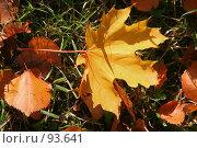 Купить «Желтый кленовый лист лежит на траве», фото № 93641, снято 23 сентября 2007 г. (c) Елена Мельникова / Фотобанк Лори