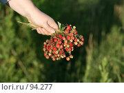 Купить «Гроздья ягоды в женской руке», фото № 94277, снято 1 июля 2007 г. (c) Марюнин Юрий / Фотобанк Лори