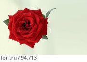 Купить «Красная роза», фото № 94713, снято 24 июня 2007 г. (c) Квитченко Лев / Фотобанк Лори