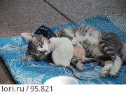 Купить «Друзья», фото № 95821, снято 5 июля 2007 г. (c) Михаил Смиров / Фотобанк Лори