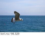 Купить «Чайка над морем», фото № 98329, снято 17 сентября 2007 г. (c) Елена Руденко / Фотобанк Лори