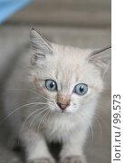 Купить «Взгляд маленького серого котенка», фото № 99573, снято 13 сентября 2007 г. (c) Останина Екатерина / Фотобанк Лори