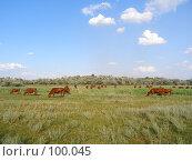 Купить «Коровы на пастбище», фото № 100045, снято 8 июля 2007 г. (c) Елена Руденко / Фотобанк Лори