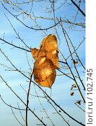 Купить «Одинокие осенние листья», фото № 102745, снято 16 декабря 2017 г. (c) Круглов Олег / Фотобанк Лори
