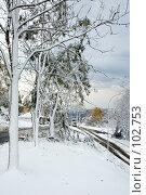 Купить «Неожиданное начало зимы во Владивостоке», фото № 102753, снято 14 августа 2018 г. (c) TigerFox / Фотобанк Лори