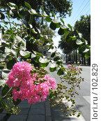 Купить «Городские цветы», фото № 102829, снято 18 августа 2018 г. (c) Автунич Алексей / Фотобанк Лори