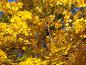 Золотой клён, фото № 103953, снято 25 октября 2016 г. (c) Кардаполова Наталья / Фотобанк Лори