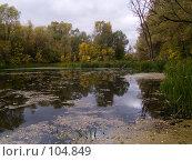 Купить «Осеннее лесное озеро», фото № 104849, снято 15 декабря 2017 г. (c) Борис Панасюк / Фотобанк Лори