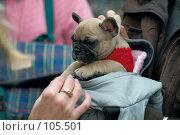 Купить «Продаётся щенок», фото № 105501, снято 27 октября 2007 г. (c) Александр Чураков / Фотобанк Лори
