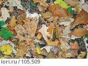 Купить «Фон из опавших осенних листьев», фото № 105509, снято 17 октября 2007 г. (c) Круглов Олег / Фотобанк Лори