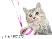 Купить «Серая кошка играет с красной новогодней игрушкой», фото № 107373, снято 26 октября 2007 г. (c) Останина Екатерина / Фотобанк Лори