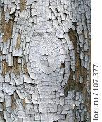 Купить «Старая краска», фото № 107377, снято 8 мая 2003 г. (c) Юрий Назаров / Фотобанк Лори