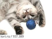 Купить «Серая кошка играет с синей новогодней игрушкой», фото № 107389, снято 19 октября 2007 г. (c) Останина Екатерина / Фотобанк Лори