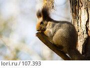 Купить «Белка 2. Squirrel 2», фото № 107393, снято 20 октября 2007 г. (c) Петр Кириллов / Фотобанк Лори