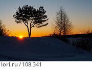 Купить «Силуэты деревьев», фото № 108341, снято 24 февраля 2007 г. (c) Александр Максимов / Фотобанк Лори