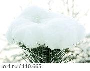 Купить «Первый снег. The first snow.», фото № 110665, снято 4 ноября 2007 г. (c) Анатолий Теребенин / Фотобанк Лори