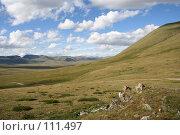 Купить «Тува: перевал Бугузун, Убсунурская котловина», фото № 111497, снято 26 июля 2006 г. (c) Александр Гершензон / Фотобанк Лори