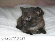 Купить «Маленький котёнок», фото № 113521, снято 7 ноября 2007 г. (c) Юлия Смольская / Фотобанк Лори