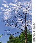 Купить «Мертвое дерево», фото № 113629, снято 30 июня 2007 г. (c) Юрий Назаров / Фотобанк Лори