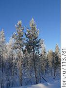 Купить «Две сосны в инее», фото № 113781, снято 9 ноября 2007 г. (c) Владимир Ильин / Фотобанк Лори