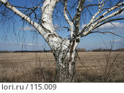 Купить «Ствол березы», фото № 115009, снято 15 апреля 2007 г. (c) Т.Кожевникова / Фотобанк Лори