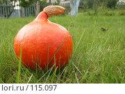 Тыква. Стоковое фото, фотограф Чумилин Леонид Александрович / Фотобанк Лори
