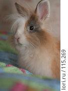 Купить «Кролик», фото № 115269, снято 29 сентября 2006 г. (c) Останина Екатерина / Фотобанк Лори