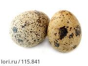Купить «Два перепелиных яйца на белом фоне», фото № 115841, снято 15 сентября 2007 г. (c) Александр Паррус / Фотобанк Лори