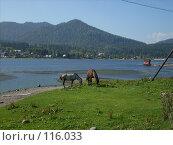 Купить «Лошади, озеро, горы...», фото № 116033, снято 1 сентября 2007 г. (c) Сергей Тундра / Фотобанк Лори