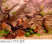 Купить «Аквариум с рыбками», фото № 117221, снято 11 ноября 2007 г. (c) Галина Щеглова / Фотобанк Лори