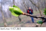 Купить «Раскрывшийся лист на фоне человека», фото № 117361, снято 8 октября 2006 г. (c) Арестов Андрей Павлович / Фотобанк Лори