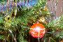 Новогодний фон с красным шаром, фото № 117953, снято 6 января 2007 г. (c) Валентин Мосичев / Фотобанк Лори