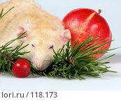 Купить «Крыса дремлет, положив мордашку на ветку елки», фото № 118173, снято 23 сентября 2007 г. (c) Иван / Фотобанк Лори