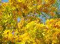 Осень, фото № 118721, снято 26 сентября 2007 г. (c) Карелин Д.А. / Фотобанк Лори