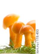 Купить «Грибы на траве», фото № 119493, снято 17 ноября 2007 г. (c) Угоренков Александр / Фотобанк Лори