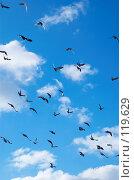 Купить «Летящие голуби», фото № 119629, снято 26 декабря 2006 г. (c) Сергей Старуш / Фотобанк Лори