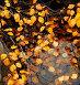 Осенняя листва на воде, фото № 120017, снято 19 сентября 2007 г. (c) Валерий Александрович / Фотобанк Лори