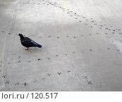 Купить «Следы голубя на бетоне», фото № 120517, снято 23 октября 2007 г. (c) Иван / Фотобанк Лори
