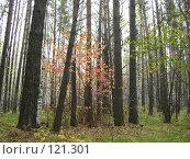 Осенний лес. Стоковое фото, фотограф Любовь Веселова / Фотобанк Лори
