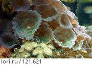 Живые кораллы. Стоковое фото, фотограф Арестов Андрей Павлович / Фотобанк Лори