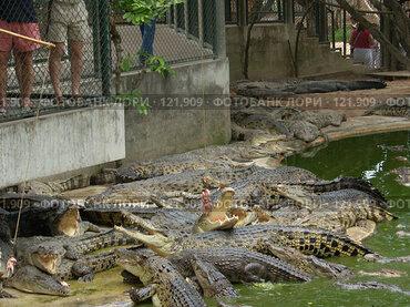 Купить «Кормление крокодилов.Таиланд», фото № 121909, снято 25 марта 2007 г. (c) Колчева Ольга / Фотобанк Лори