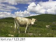 Пейзаж с коровой. Стоковое фото, фотограф Коваль Василий / Фотобанк Лори