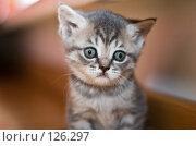 Купить «Грустный котенок», фото № 126297, снято 23 мая 2018 г. (c) Игорь Соколов / Фотобанк Лори