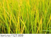 Купить «Фон: трава», фото № 127009, снято 20 октября 2007 г. (c) Роман Коротаев / Фотобанк Лори
